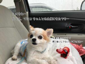 まみこちゃんと名古屋にきたでちー
