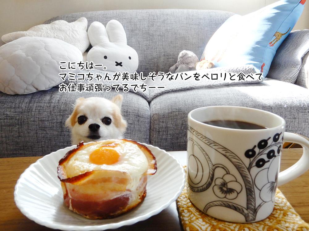 こにちはー。マミコちゃんが美味しそうなパンをペロリと食べてお仕事頑張ってるでちーー