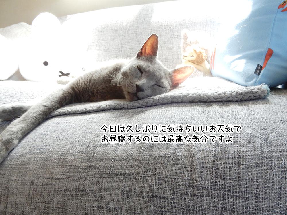 今日は久しぶりに気持ちいいお天気で お昼寝するのには最高な気分ですよ