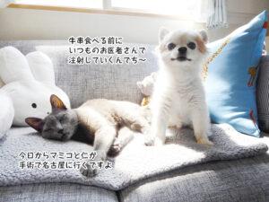 今日からマミコと仁が 手術で名古屋に行くですよ