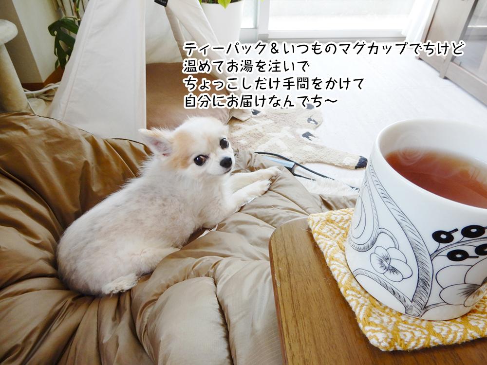 ティーパック&いつものマグカップでちけど 温めてお湯を注いで ちょっこしだけ手間をかけて 自分にお届けなんでち~
