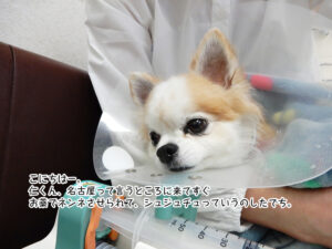 こにちはー。 仁くん、名古屋って言うところに来てすぐ お薬でネンネさせられて、シュジュチュっていうのしたでち。