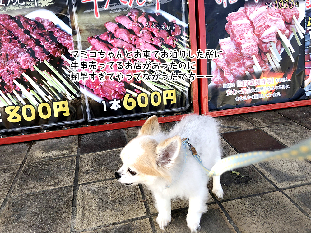 マミコちゃんとお車でお泊りした所に 牛串売ってるお店があったのに 朝早すぎてやってなかったでちーー