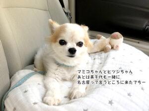 マミコちゃんとヒツジちゃん あとは美千代も一緒に 名古屋って言うところに来たでちー