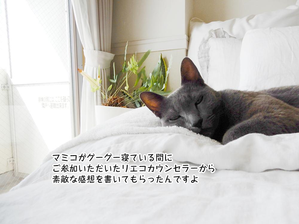 マミコがグーグー寝ている間に ご参加いただいたリエコカウンセラーから 素敵な感想を書いてもらったんですよ