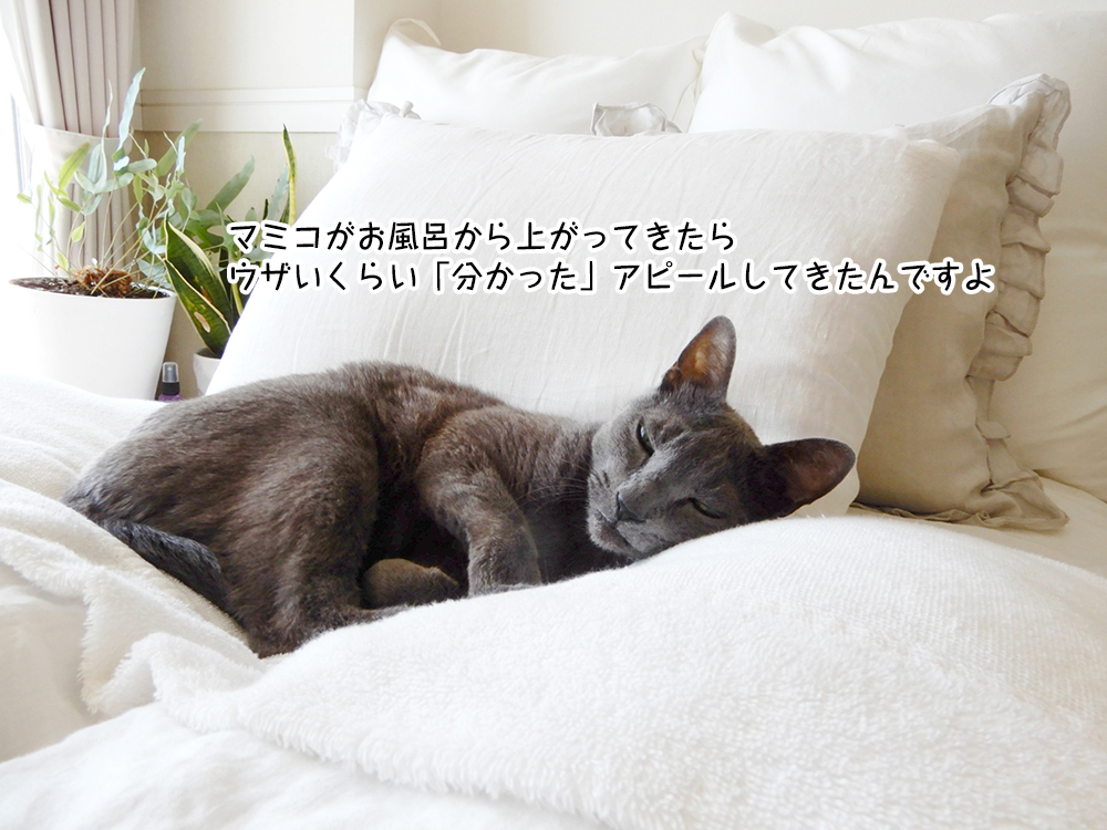 マミコがお風呂から上がってきたら ウザいくらい「分かった」アピールしてきたんですよ