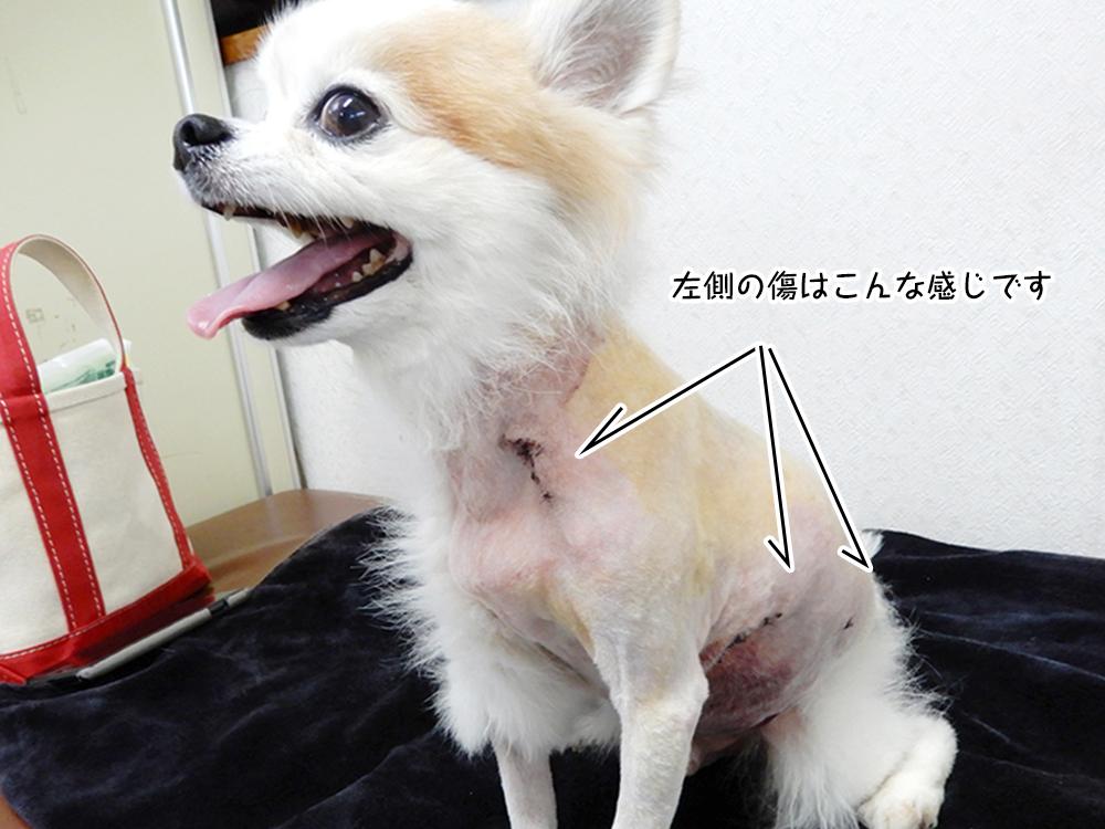 左側の傷はこんな感じです