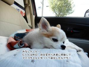 みなしゃーん! 仁くんは昨日、待合室からお車に移動して マミコちゃんとゆっくり面会したんでちー