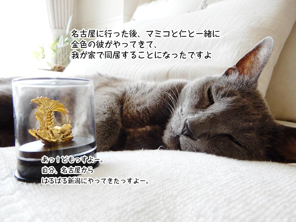 名古屋に行った後、マミコと仁と一緒に 金色の彼がやってきて、我が家で同居することになったですよ