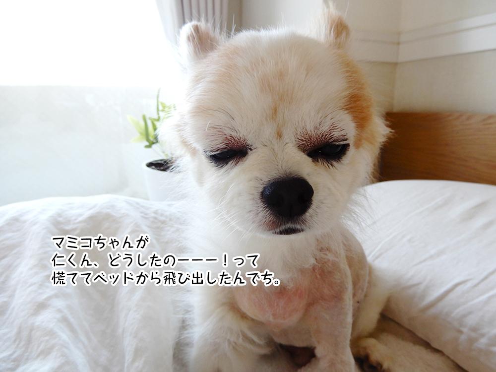 マミコちゃんが 仁くん、どうしたのーーー!って 慌ててベッドから飛び出したんでち。