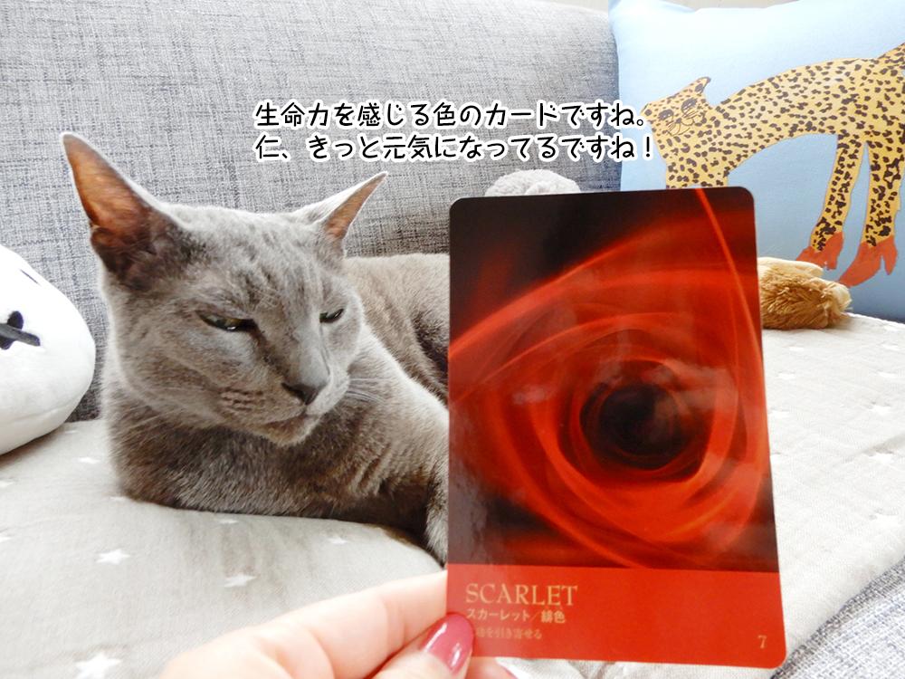生命力を感じる色のカードですね。 仁、きっと元気になってるですね!