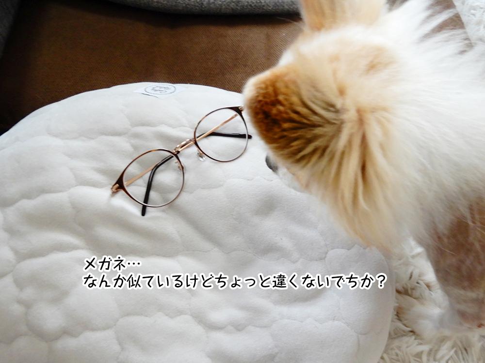 メガネ… なんか似ているけどちょっと違くないでちか?
