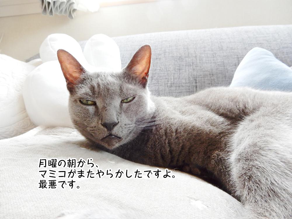 月曜の朝から、 マミコがまたやらかしたですよ。 最悪です。