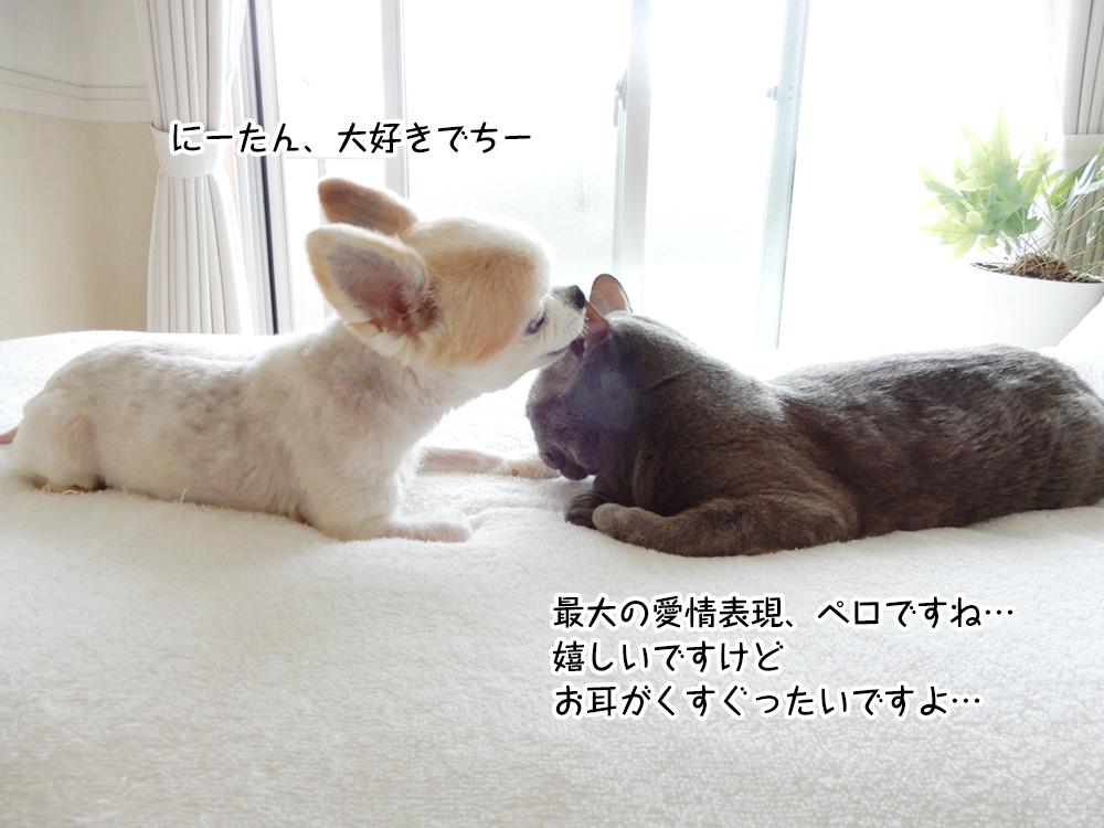 最大の愛情表現、ペロですね… 嬉しいですけど お耳がくすぐったいですよ…
