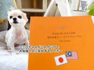 マミコちゃんがこれからITで お勉強の会に参加するんでちー