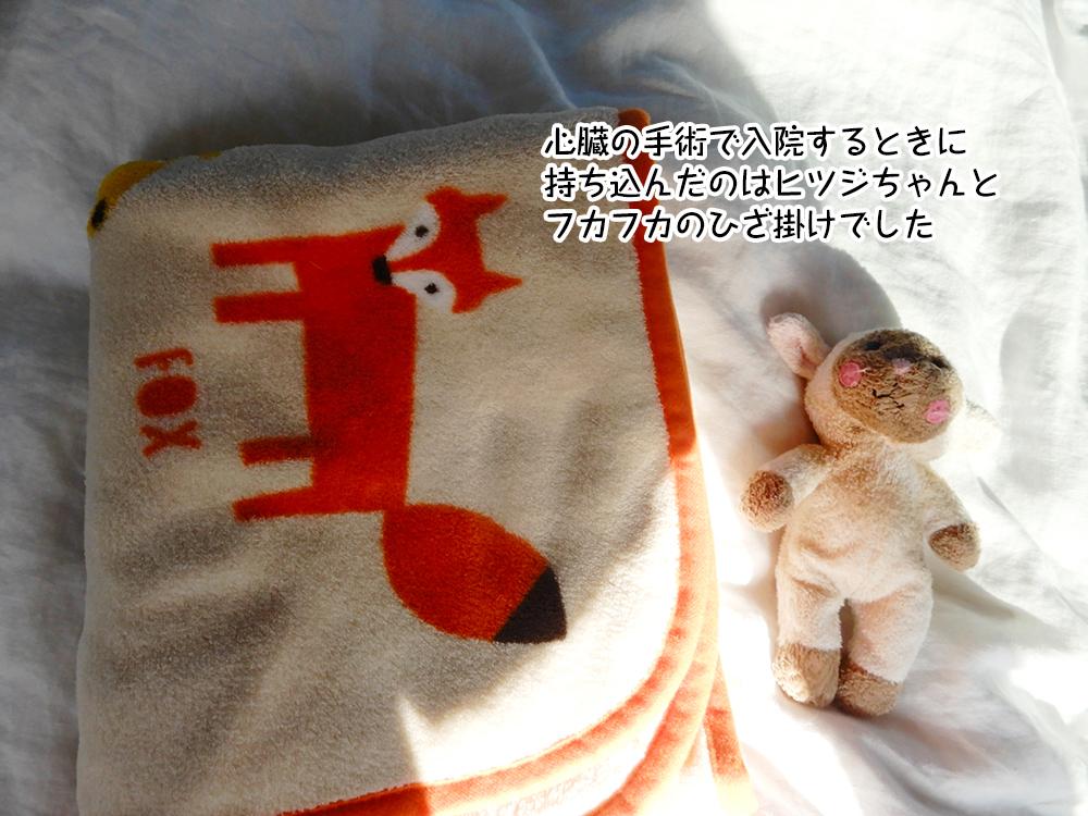 心臓の手術で入院するときに 持ち込んだのはヒツジちゃんと フカフカのひざ掛けでした