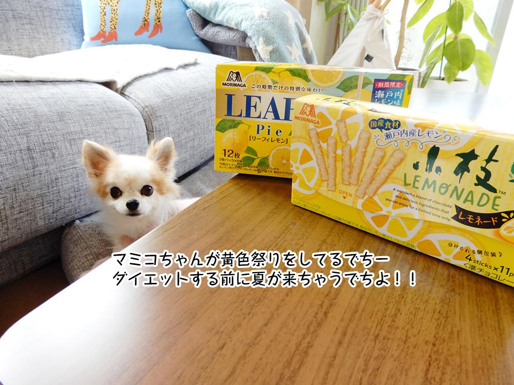 マミコちゃんが黄色祭りをしてるでちー ダイエットする前に夏が来ちゃうでちよ!!