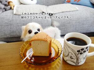 ふかふかのケーキでち!! 朝かマミコちゃんばっかりズルイでちー