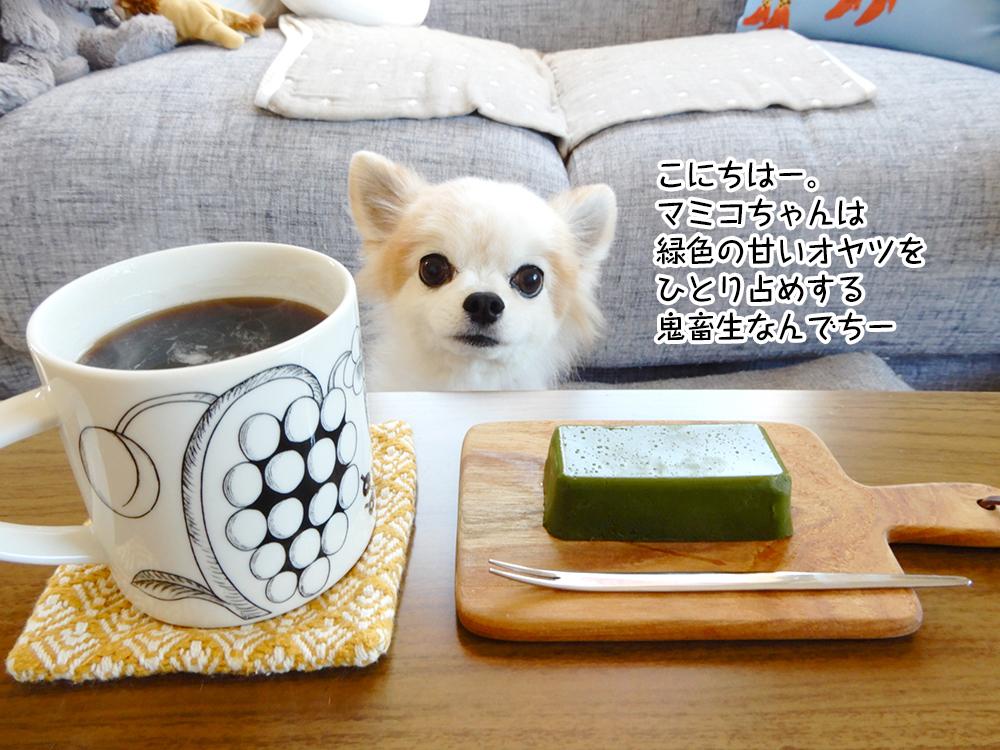 こにちはー。マミコちゃんは緑色の甘いオヤツをひとり占めする鬼畜生なんでちー