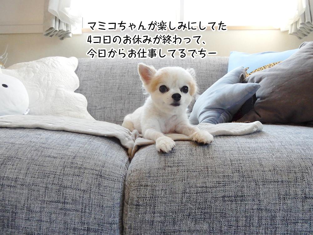 マミコちゃんが楽しみにしてた 4コ日のお休みが終わって、 今日からお仕事してるでちー