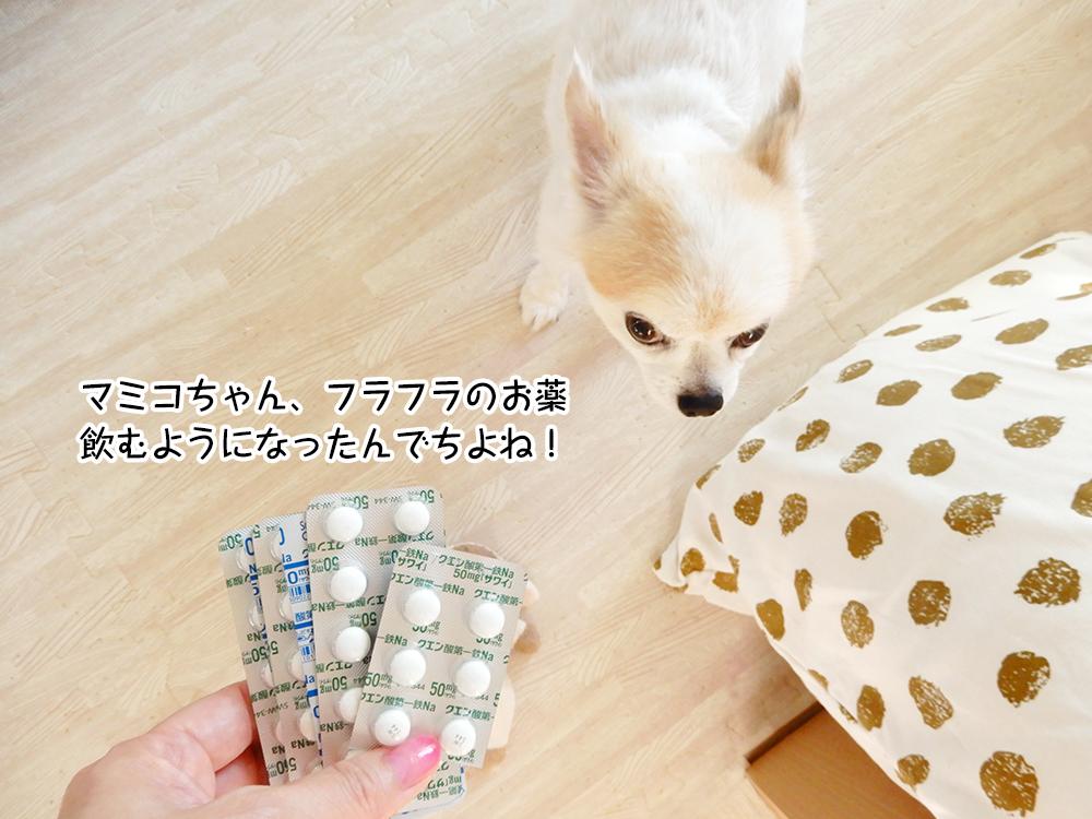 マミコちゃん、フラフラのお薬飲むようになったんでちよね!