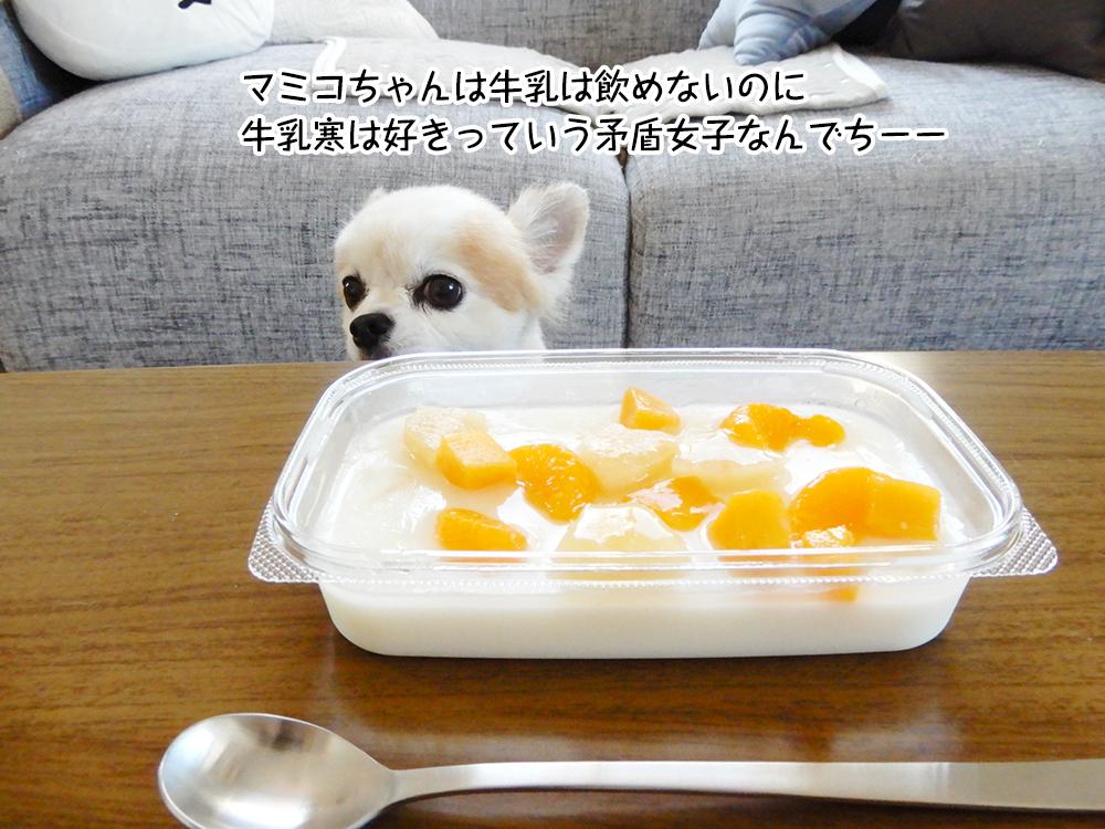 マミコちゃんは牛乳は飲めないのに牛乳寒は好きっていう矛盾女子なんでちー