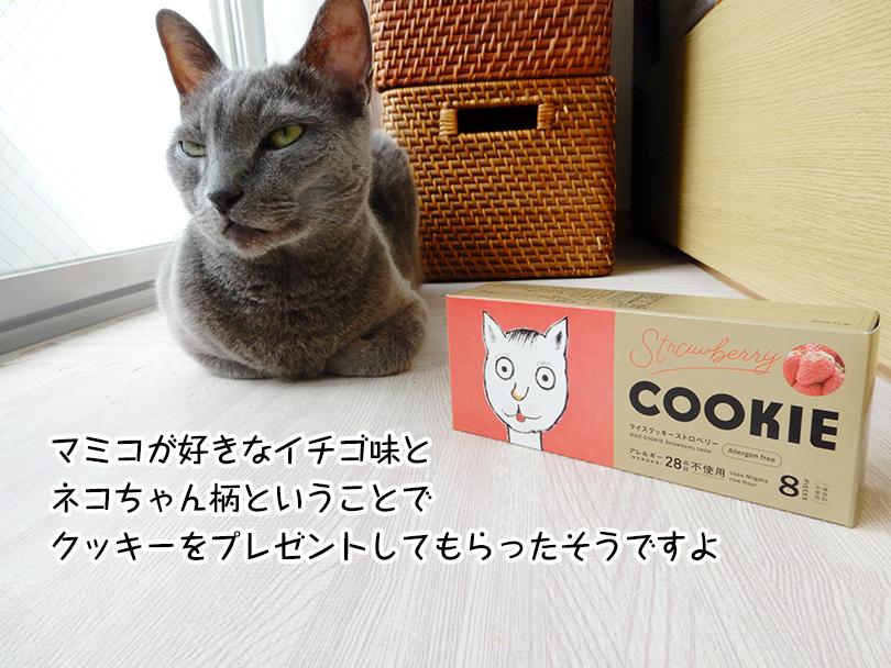 マミコが好きなイチゴ味と ネコちゃん柄ということで クッキーをプレゼントしてもらったそうですよ
