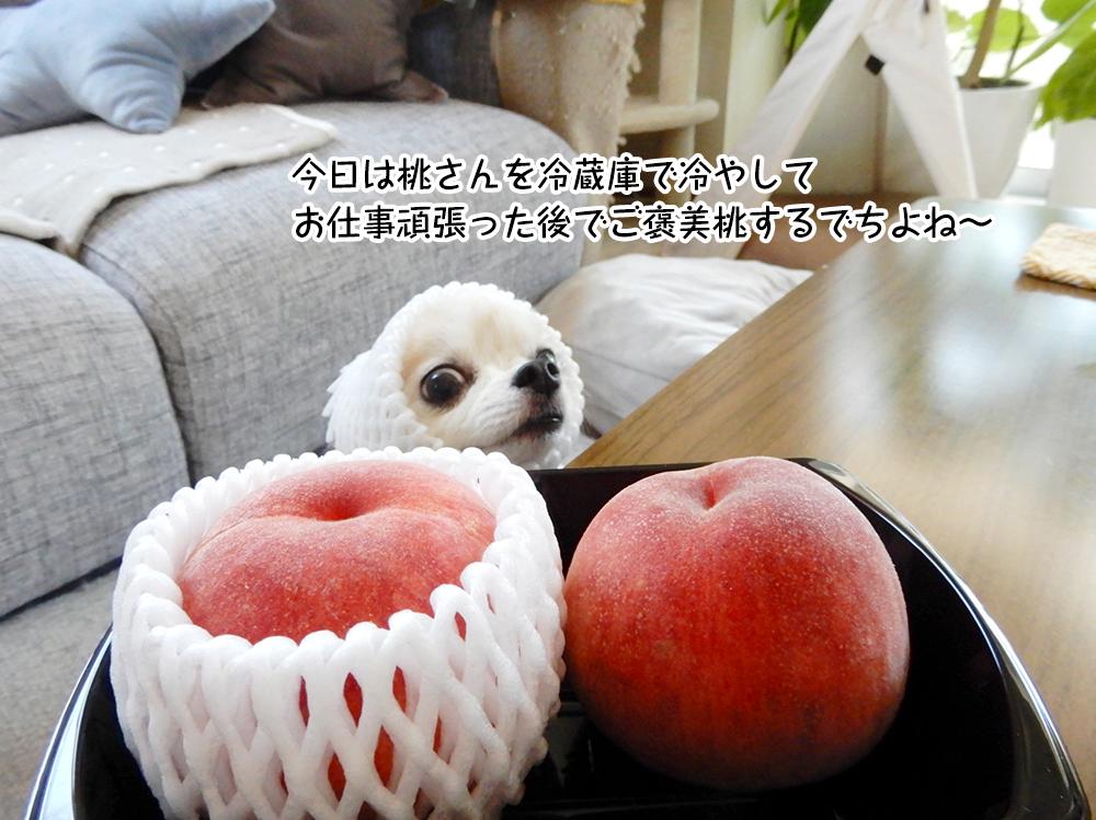 今日は桃さんを冷蔵庫で冷やして お仕事頑張った後でご褒美桃するでちよね~