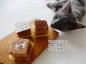 四角いパン?? 四角いお菓子?? なんですか、コレ??