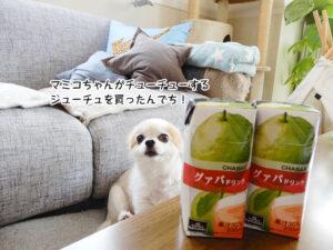 マミコちゃんがチューチューする ジューチュを買ったんでち!