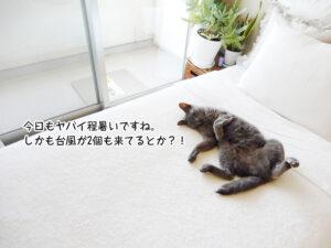 今日もヤバイ程暑いですね。 しかも台風が2個も来てるとか?!