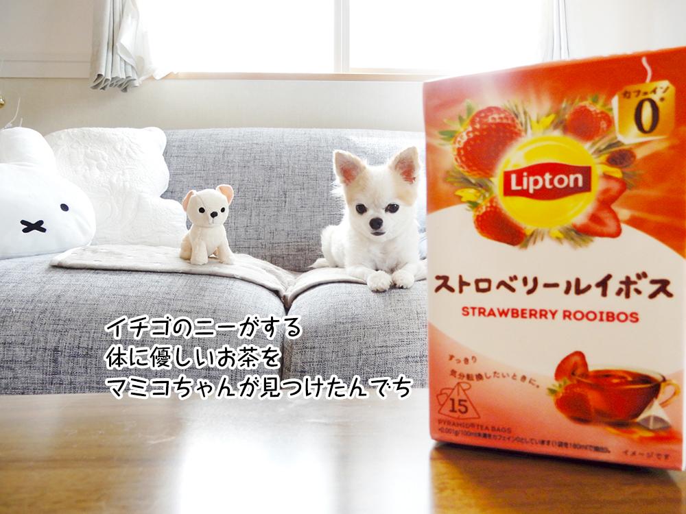 イチゴのニーがする体に優しいお茶を マミコちゃんが見つけたんでち