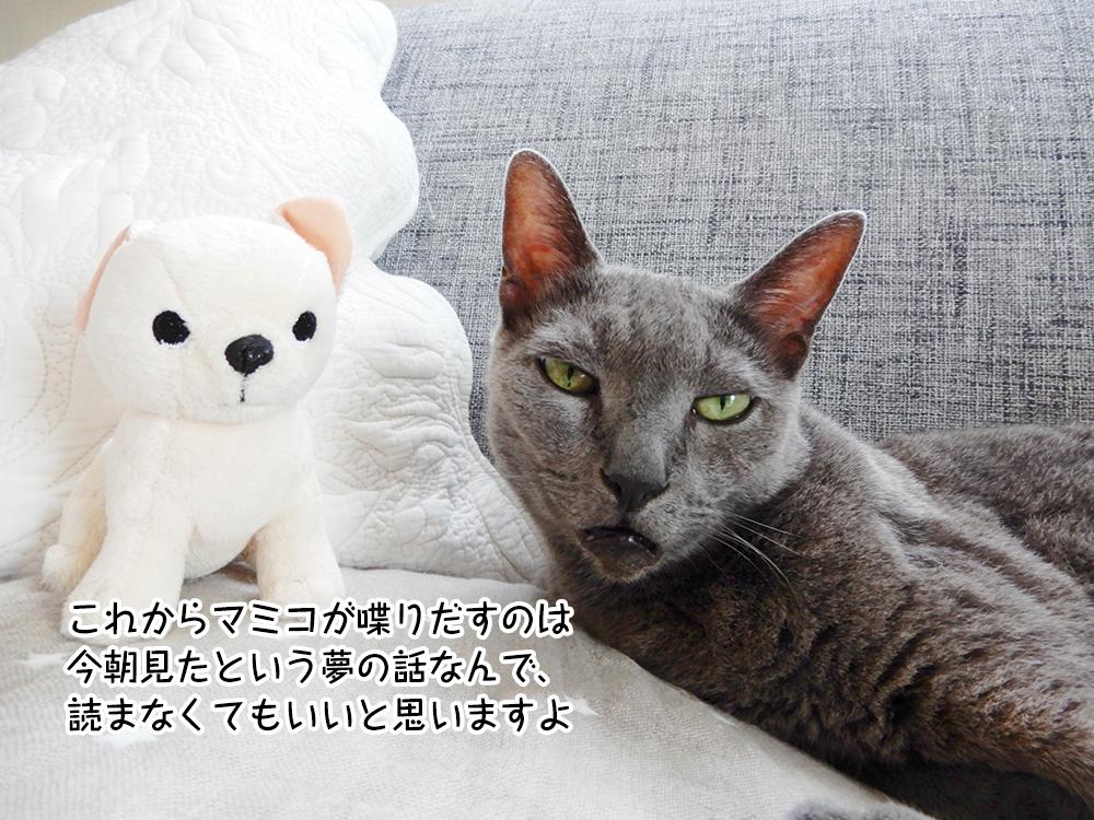 これからマミコが喋りだすのは 今朝見たという夢の話なんで、 読まなくてもいいと思いますよ