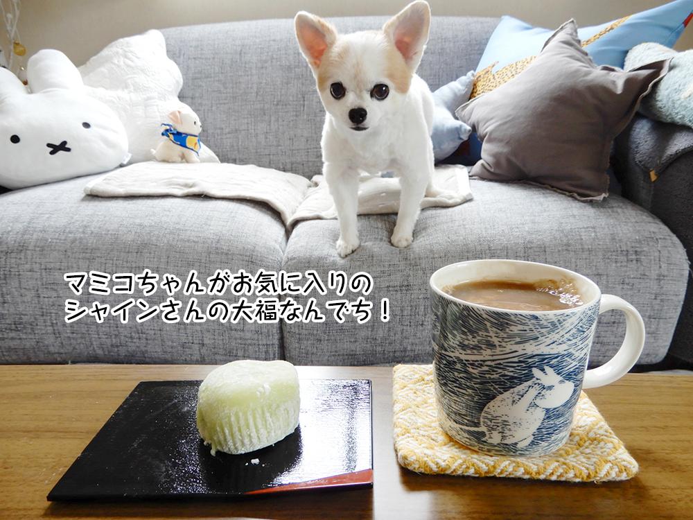 マミコちゃんがお気に入りの シャインさんの大福なんでち!