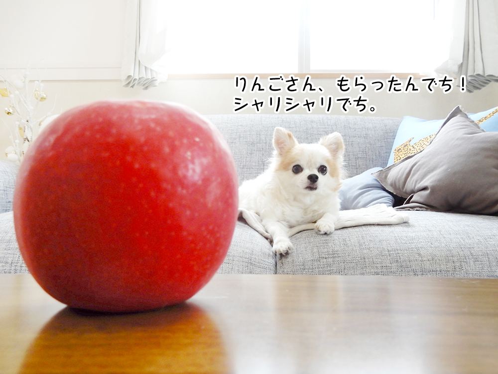 りんごさん、もらったんでち! シャリシャリでち。