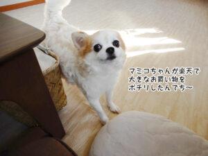マミコちゃんが楽天で 大きなお買い物を ポチリしたんでち~