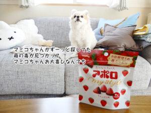 マミコちゃんがずーっと探してた 苺の毒が見つかって マミコちゃんお大喜びなんでち