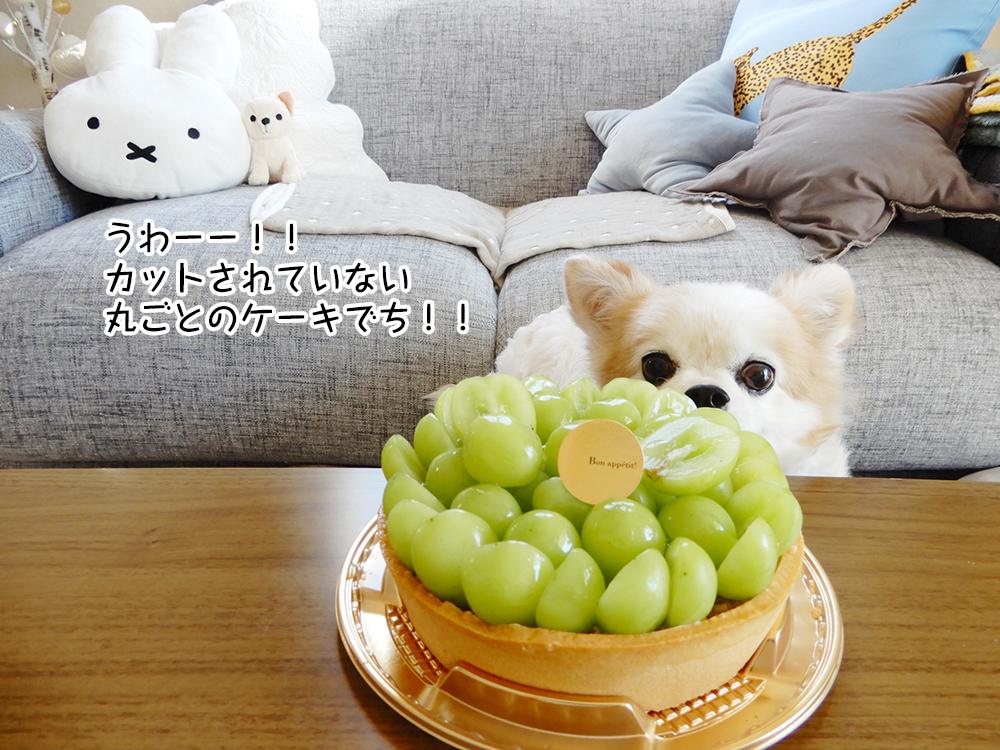 うわーー!! カットされていない 丸ごとのケーキでち!!