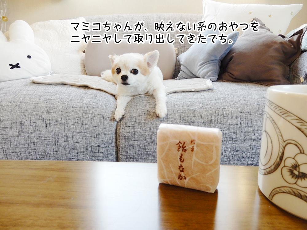 マミコちゃんが、映えない系のおやつを ニヤニヤして取り出してきたでち。
