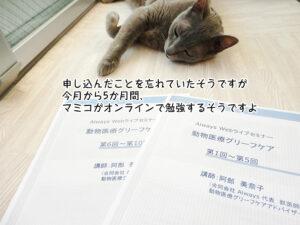 申し込んだことを忘れていたそうですが 今月から5か月間、 マミコがオンラインで勉強するそうですよ