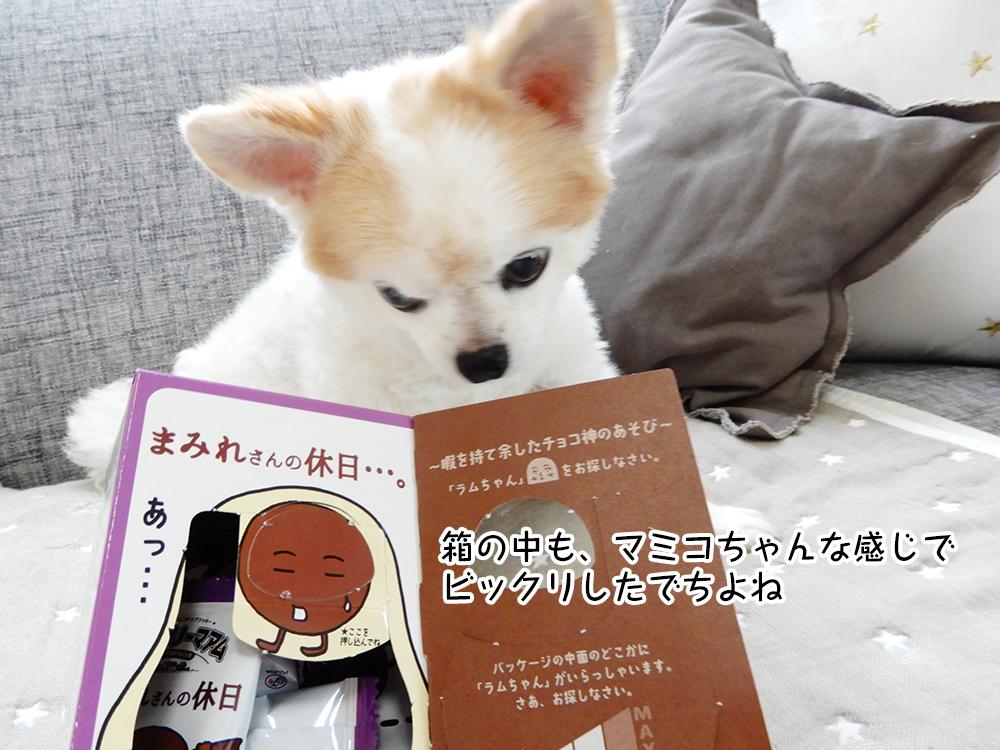 (公募)マミコのキャッチフレーズ大募集・セカントシーズン! ~自己受容レッスンブックプレゼント付~
